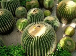Почему у кактуса колючки2