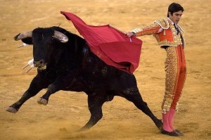 почему бык реагирует на красный цвет