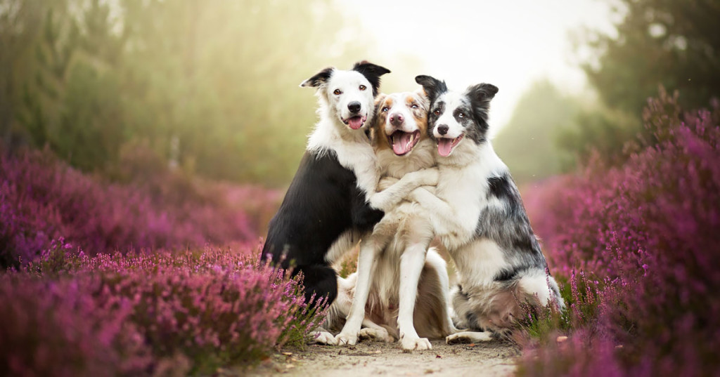 animals-dog-photography-alicja-zmyslowska-fb