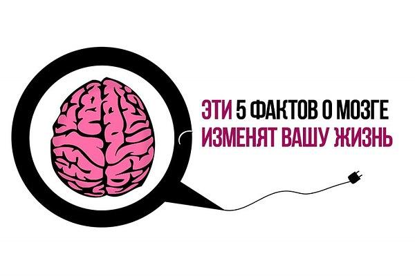 факты о мозге