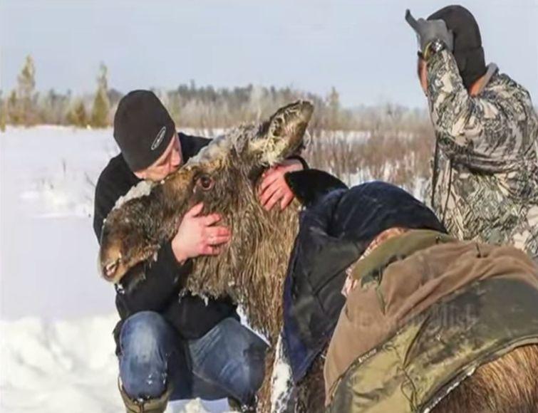 Спасение животных, мир не без добрых людей