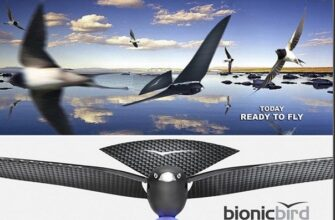 в 2015 году, вы можете получить принципиально новое устройство такого рода - искусственная птица Bionic Bird, которая принимает принцип полета реальной птицы.