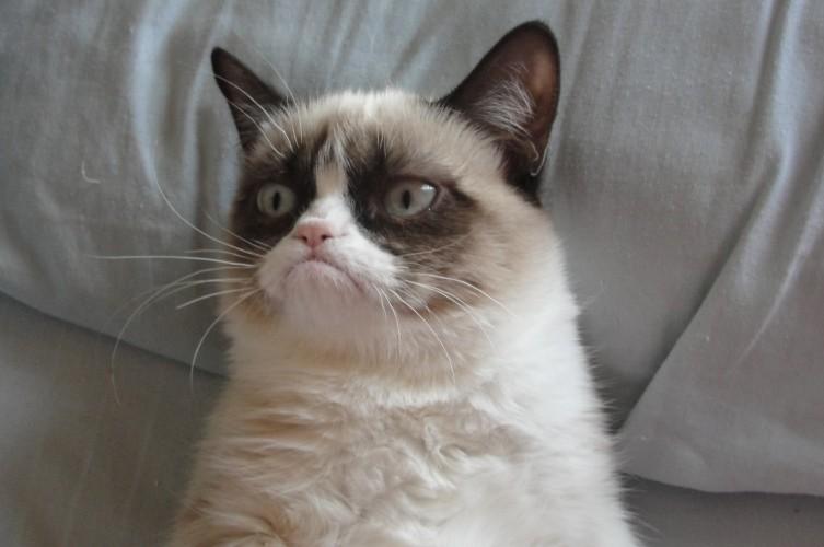 В США, штат Аризона, сердитый кот по имени Grumpy Cat за 2 года сумел заработать около сотни миллионов долларов. Многие голливудские звезды с ним не сравнятся.