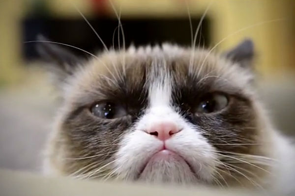 Сердитый кот стал мультимиллионером