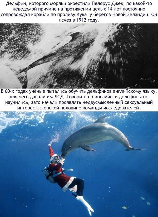 Любопытные факты о дельфинах