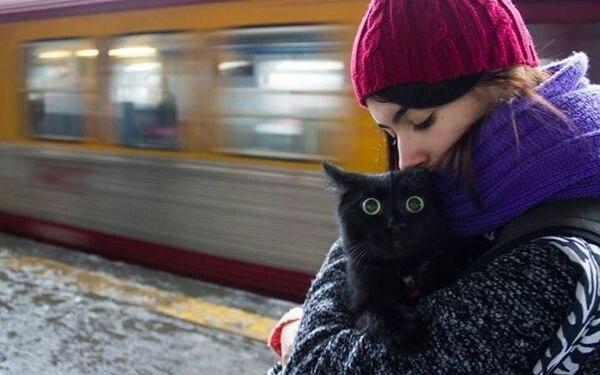 реакция кота на поезд