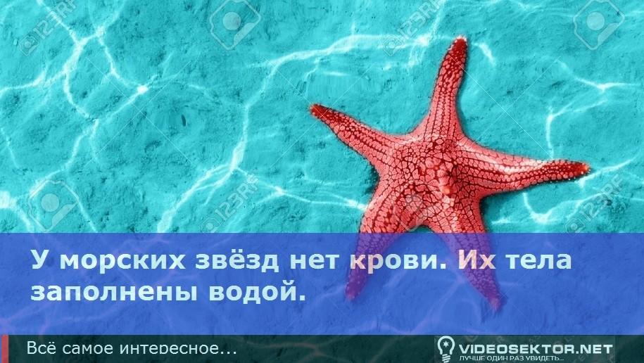 zvezda_Fact_8