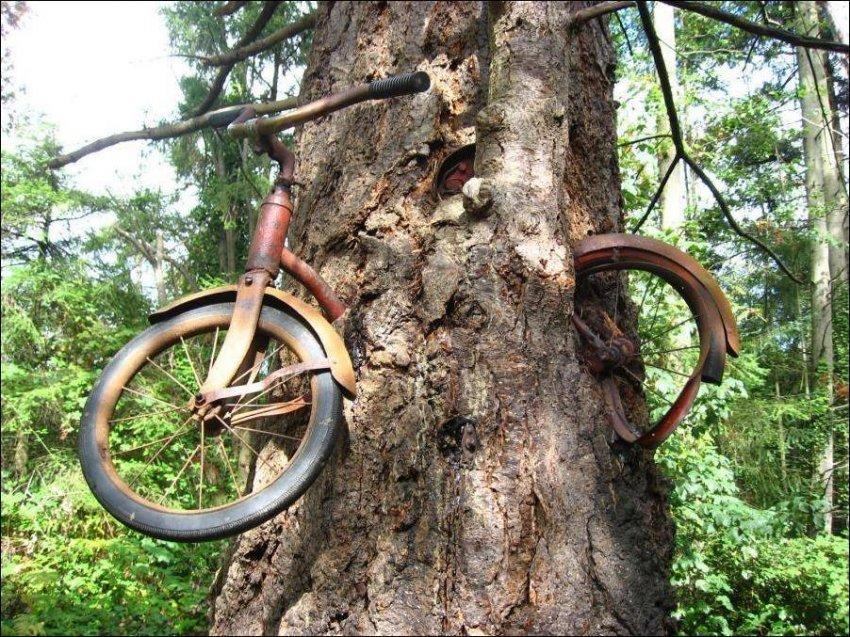 Интересные факты про дерево