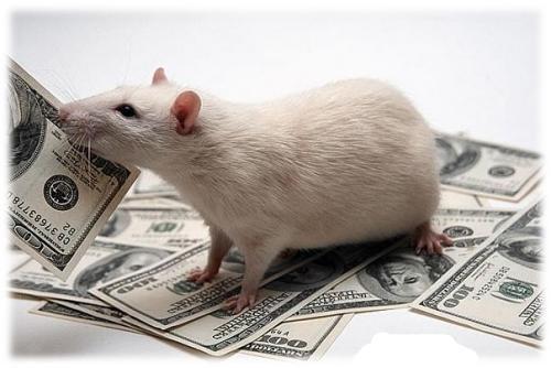 крысы жрут
