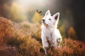 собака и бабочка фото