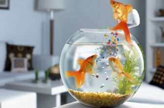 Особенности питания рыб и подбор корма